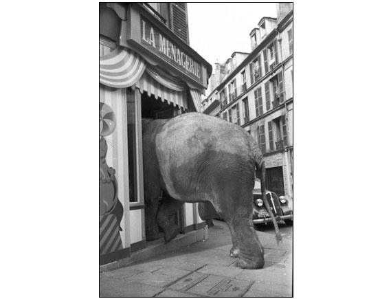 Elephant shopping.
